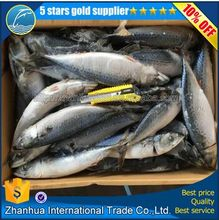 frozen whole round Pacific Mackerel (Scomber Japonicus) ,mackerel,Frozen Seafood