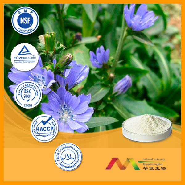 Hot Product 100% Pure Natural Chicory Extract Inulin