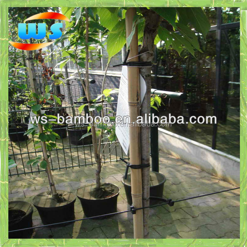 Plant support of bamboo pole, dry baboo pole, garden bamboo pole