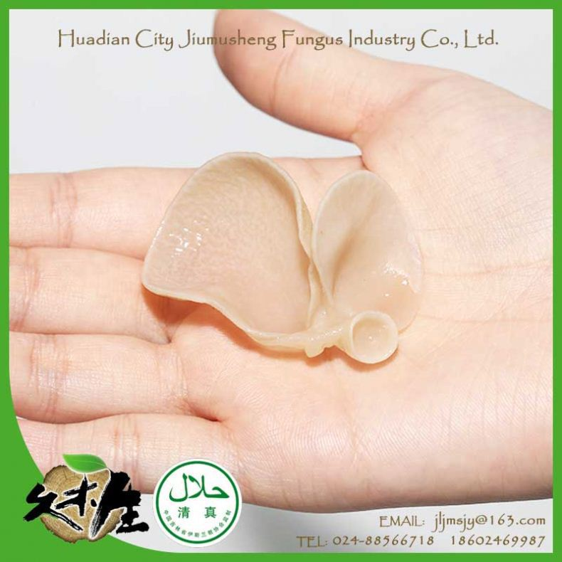 Multifunction nutrition food best price edible fungus dried white fungus