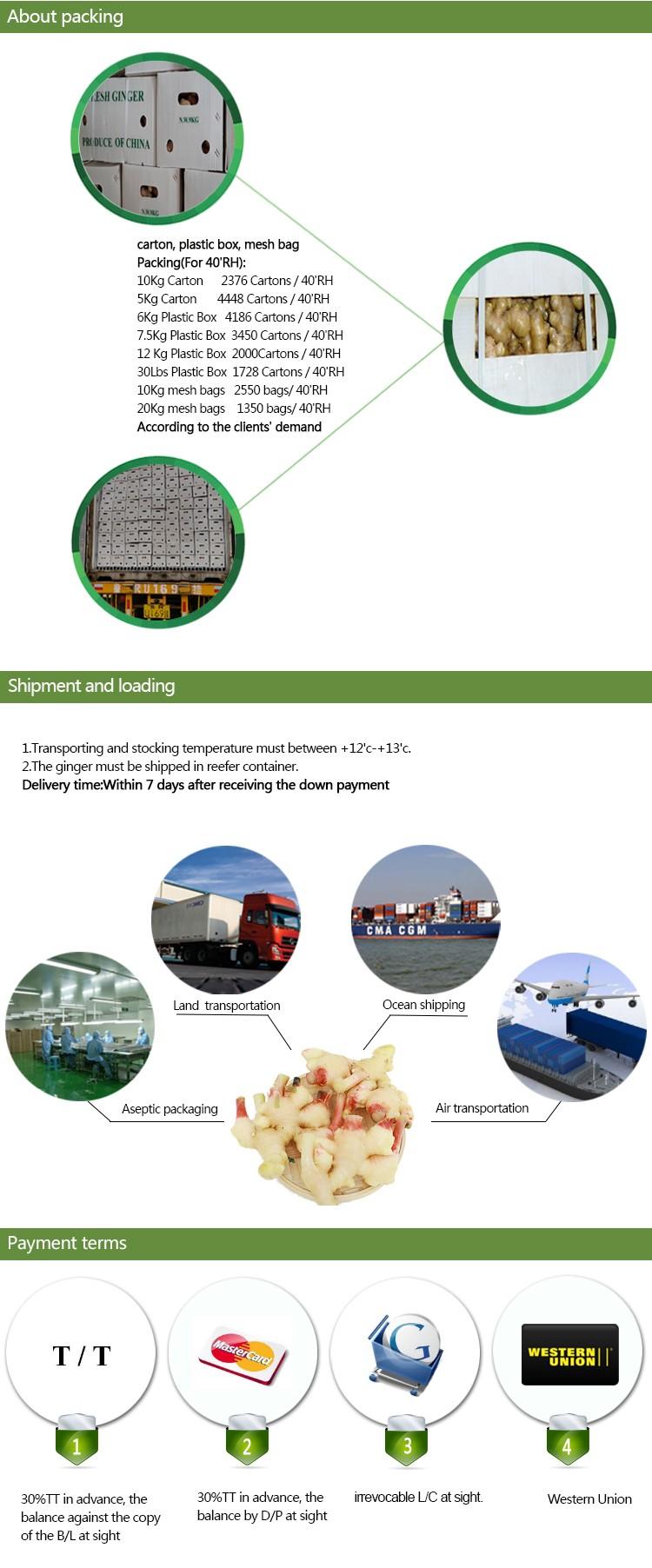 China Export Price 1kg China Mature Fresh Ginger