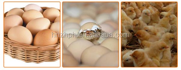 112 1000 Cheap Eggs Incubators Mini For Sale In Ghana