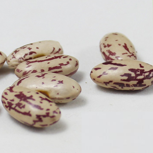 Long Shape Light Speckled Kidney Bean 2018 Crop HPS Quality