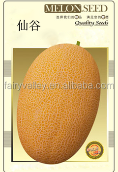 Hybrid F1 Golden Yellow Sweet Hami Melon Seeds Japanese Cantaloupe Melon Seeds High Mountain No 1 View Hami Melon Seeds Fairy Valley Product Details From Shanghai Fairy Valley Industrial Co Ltd On Alibaba Com What's the difference between honeydew melon and cantaloupe? hybrid f1 golden yellow sweet hami melon seeds japanese cantaloupe melon seeds high mountain no 1 view hami melon seeds fairy valley product details