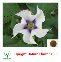 Supply with best price, 10:1, Upright Datura Flower P.E./Upright Datura Flower Extract Powder