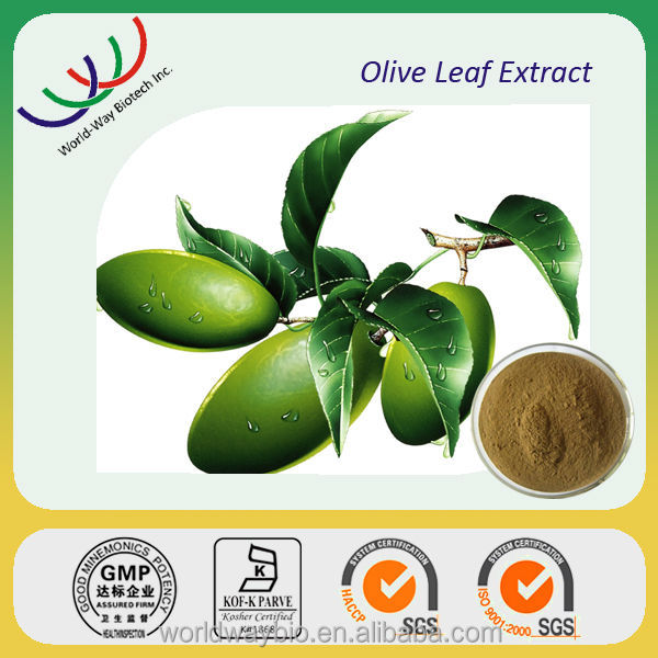 Free sample China supplier hot herbal extract oleuropein 20% oliver leaf extract powder