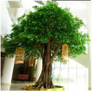 manufacturer cheap artificial trees steel banyan tree wholesale live ficus tree