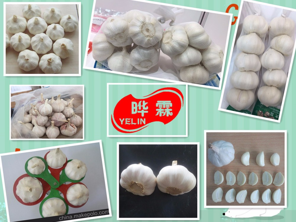 Liliaceous Vegetabless Product Type and ISO9001 Certification Garlic 2017 best price from China