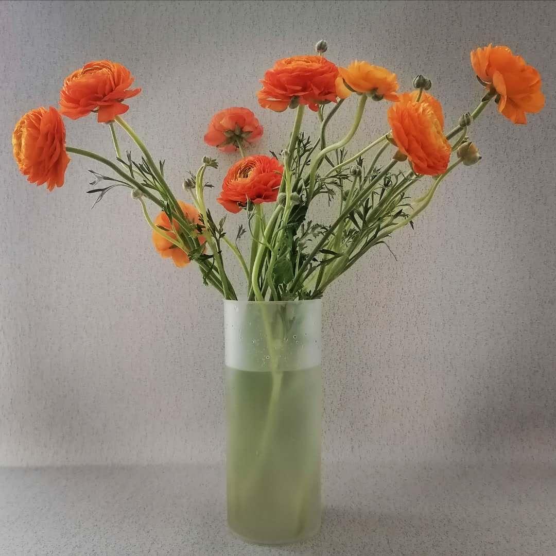 פלסטיק פעור פה אגרטל פרחים