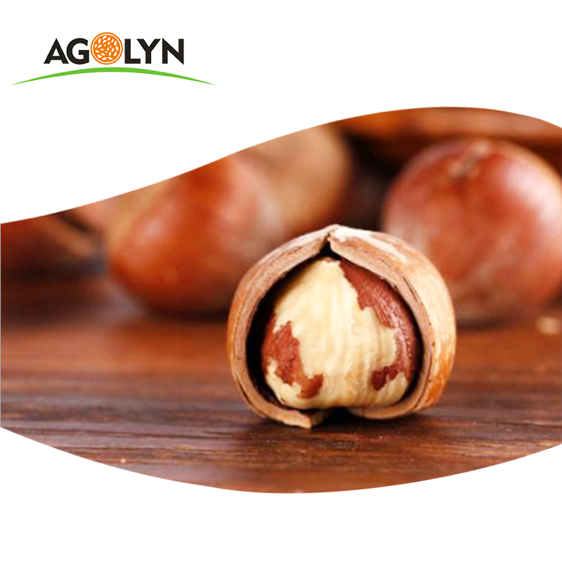 AGOLYN Roasted Natural Hazelnut with Shell