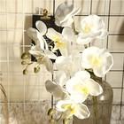Hot sale latex phalaenopsis flower arrangement artificial latex butterfly orchid wedding decoration