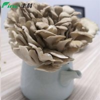 Hot Sale Factory Price Organic Maitake Mushroom Flower Mushroom