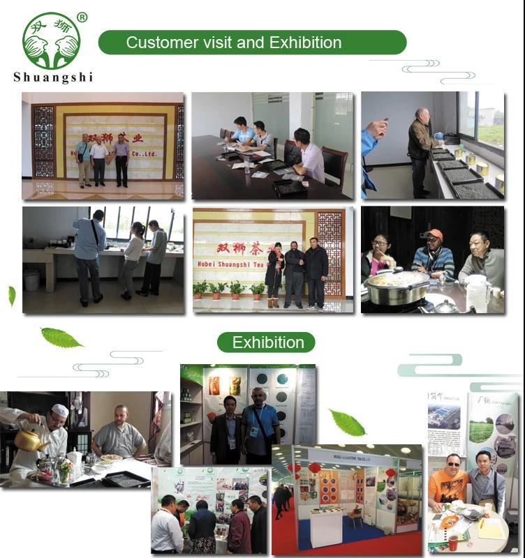 Chinese High Quality Green Tea Chunmee Eye Brow Tea - 4uTea | 4uTea.com