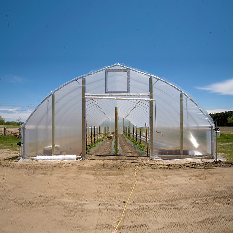 Skyplant Economical Tunnel Greenhouse for Totamo Vegetables Hot Sale Single Span Galvanized Small Tunnel Greenhouse