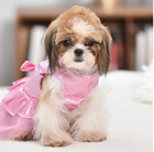 Girl Dresses High-end Luxury Girl Dog And Cat Dresses Thin Summer Pet Clothes And Accessories