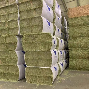 Premium Quality single compressed alfalfa hay bales cubes in united states for Animal Feeding