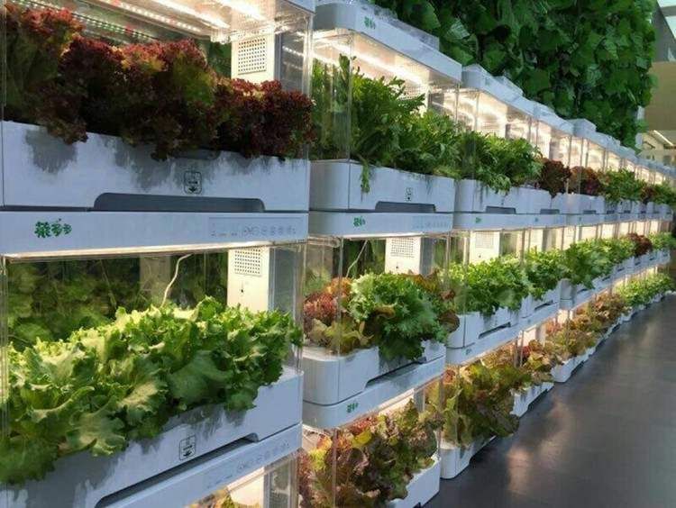 Cost-effect Fully Automatic Hydroponic Grow Systems