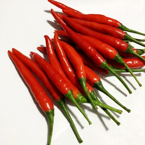 2020 New Arrival High Yeild Chinese Vegetable Hybrid F1 Dunjiao Chilli <strong>Seeds</strong>