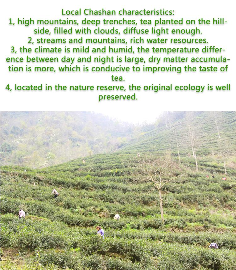 China Green Tea Wholesale factory chunmee 41022 - 4uTea | 4uTea.com