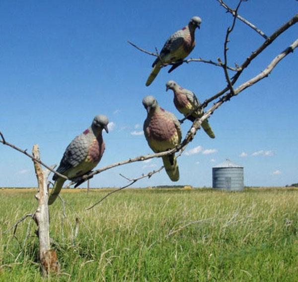 XPE SCHAUM Material pigeon lockvogel für hunter jagd