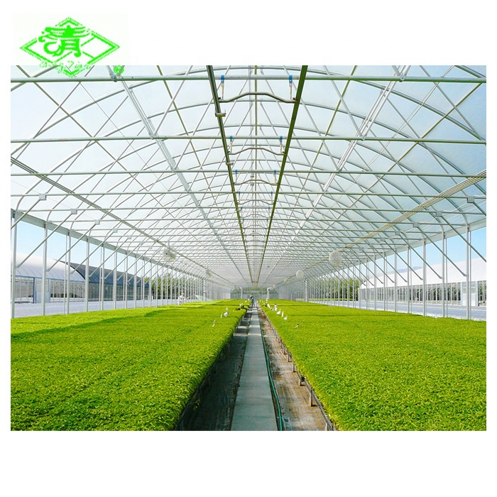 200 micron agricultural plastic greenhouse shed film for tomato