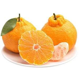 Tasty Navel Orange /Japanese hybrid orange