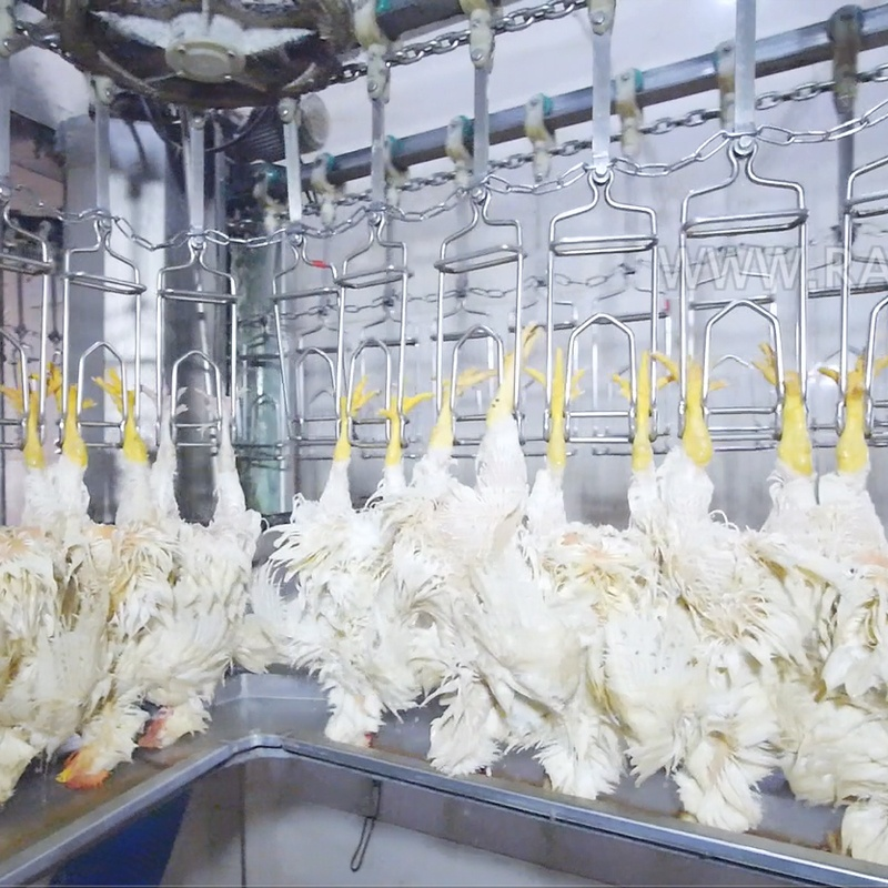 <strong>Chicken</strong> <strong>Feet</strong> <strong>Processing</strong> Slaughterhouse Production Line
