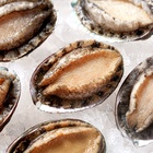 Fresh and delicious frozen abalone fleshy plump natural seafood