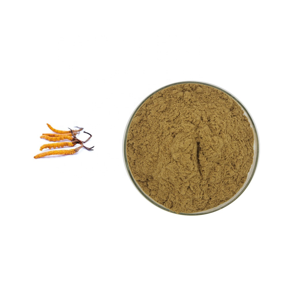 Wholesale Price Cordyceps Mushroom Extract Sinensis Extract 20% Polysaccharides Powder