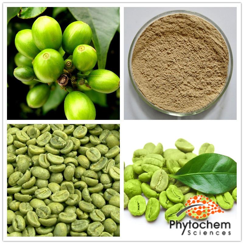 Nhà sản xuất nhà máy Coffea arabica L. giá tốt nhất của màu xanh lá cây cà phê đậu nhà máy chiết xuất
