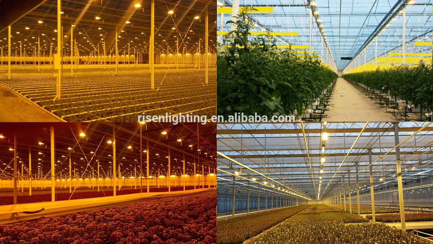 China Factory 1000W DE HPS  Hydroponics grow light with Alanod reflector electronic controller ballast for greenhouse
