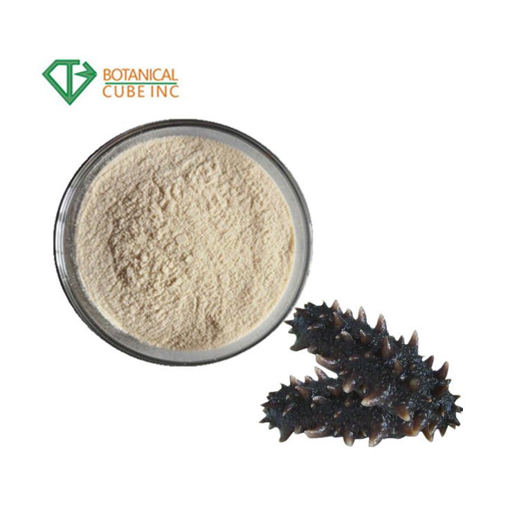 Top Quality Sea Cucumber Extract Powder Sea Cucumber Polypeptide