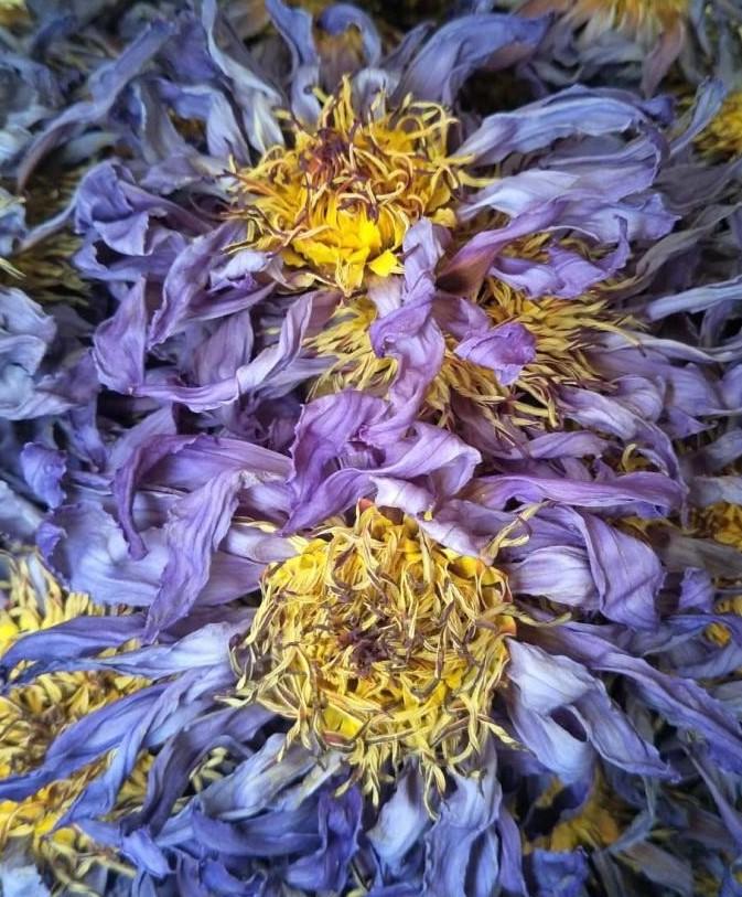 Hot selling Handmade blooming flower petal tea Blue lotus tea - 4uTea | 4uTea.com