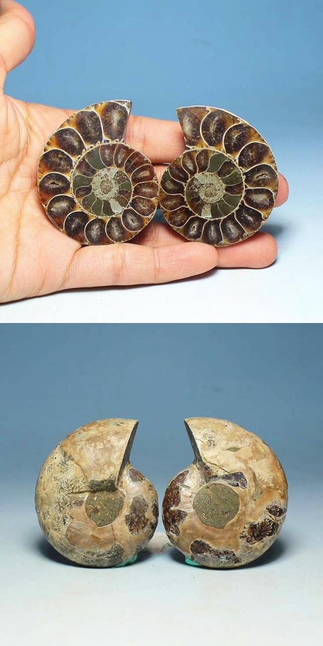 Chinese factory Rainbow ammonite fossils snail conch Pendant Decorative