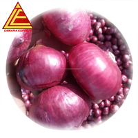 Fresh Indian Big Onion for Export Vietnam Malaysia Singapore