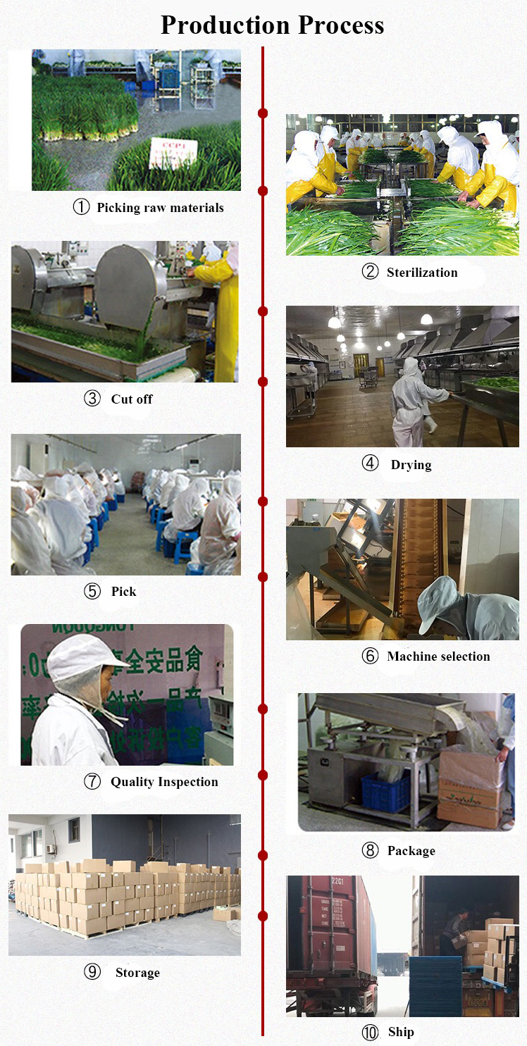 New Product Pumpkin Seed Extract Powder flour Bulk Manufacture to Exported to the rest of the world