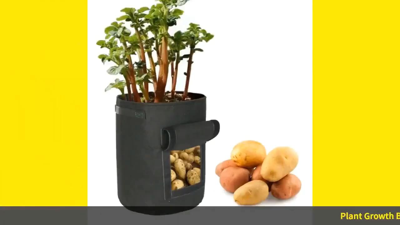 Huis Tuin Plant Groei Tas Groente Planten Bag Aardappel Tomaat Kas Hydraterende Jardin Verticale Tuin Grow Bag Thuis