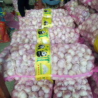 B 5.5cm ~ 6.0cm export natural elephant Chinese fresh common white garlic unprocessed red garlic alho