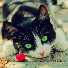DIY 5D алмазная картина полная круглая дрель кошка Алмазная вышивка животное вышивка крестом мозаика Стразы домашний декор Настенная Наклейк...(Китай)