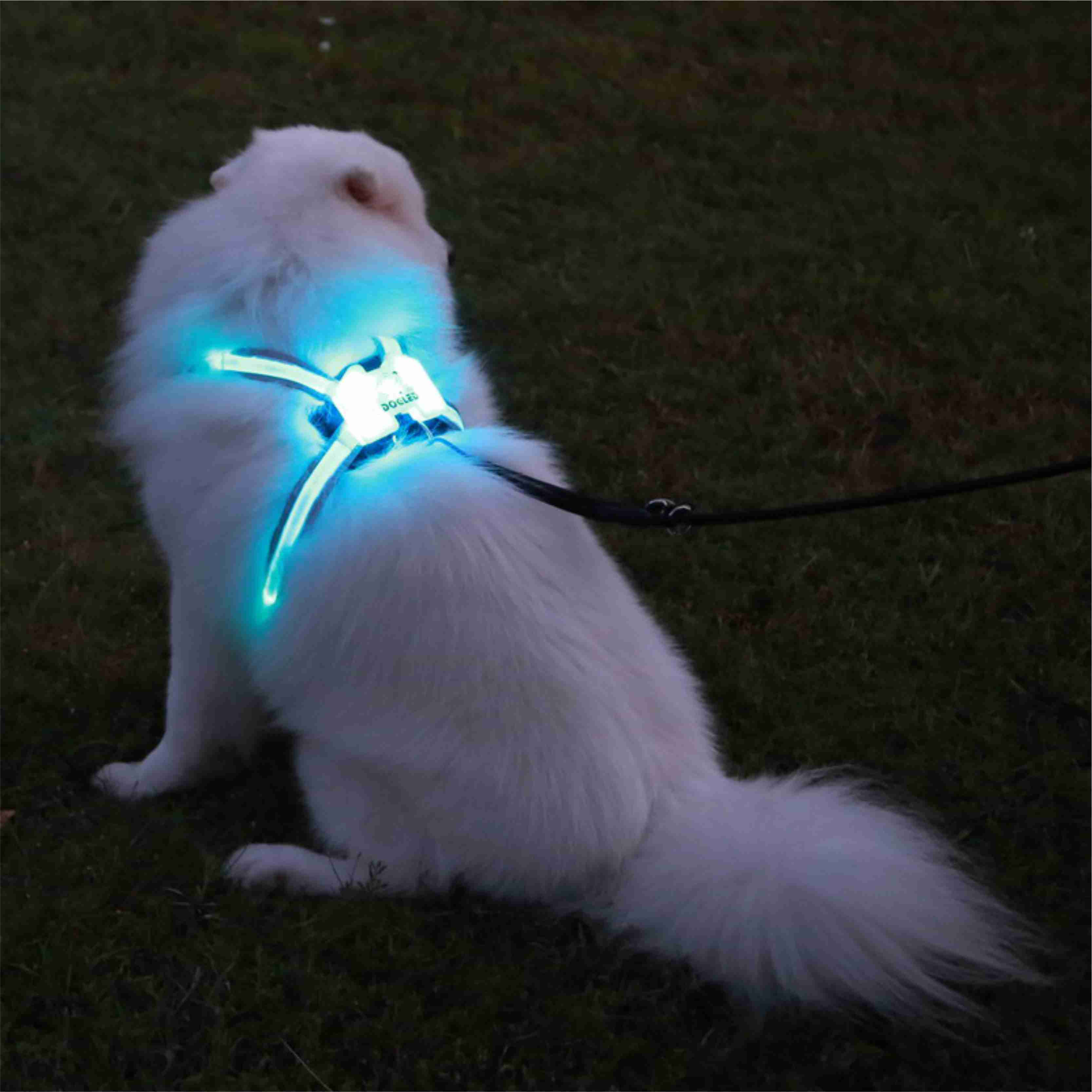 Professional ผลิตสัตว์เลี้ยง LED สายรัดสุนัขใหม่ 2020 รายการโปรด LED สัตว์เลี้ยงสุนัข Cat Harness และสายจูงการฝึกอบรมปลอดภัย