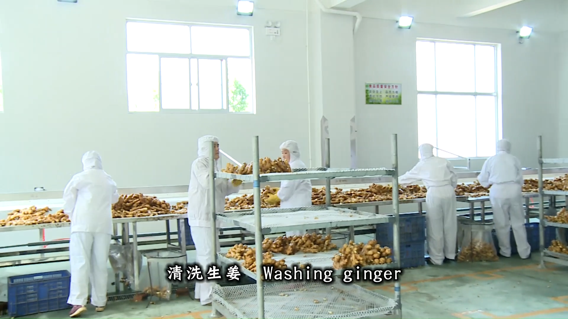 Agriculture Of Wholesale Export Chinese Fresh Ginger Root Price