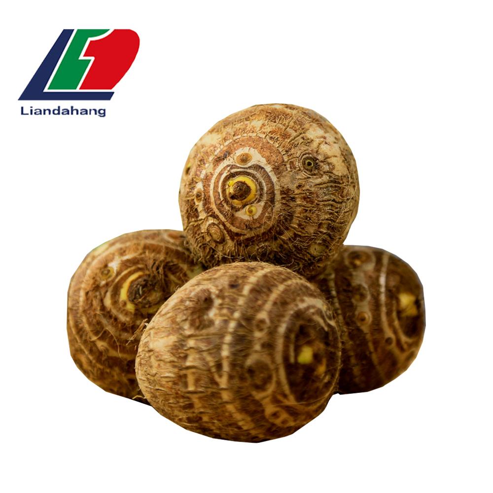 Malanga 新鮮なサトイモ/里芋/Eddo ソバシーズン、ベトナム乾燥したサトイモ