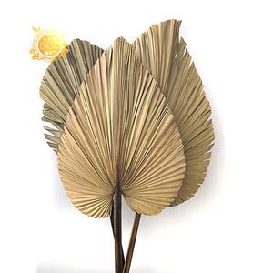 Wholesale Dried Palm Leaves/ Palm Leaf/ Dried Palm Leaves for wedding decor, palm leaves decoration