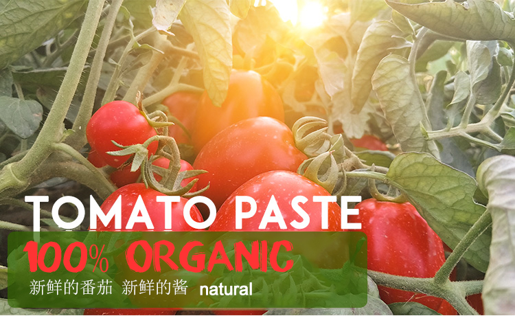 Wholesale high quality tomato paste barrel aseptic 36/38 brix 28-30% 36-38%