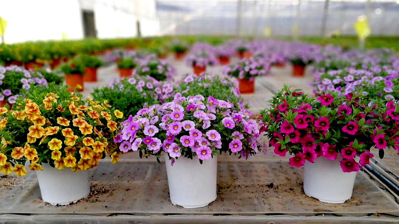 bulk color deep small plastic flower plant pots for garden nursery