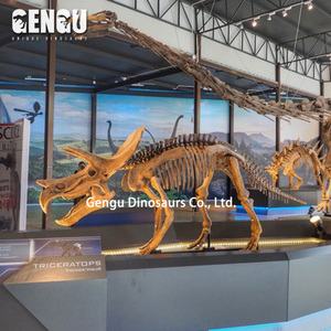 Hot sale replica dinosaur fossils colorful dinosaur skeleton