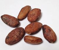 100% Good quality Dried Cocoa/ Cacao/ Chocolate bean s