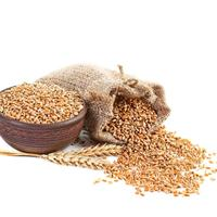 Wheat grain (Class 4 Group A) / organic price russian seeds grain wheat