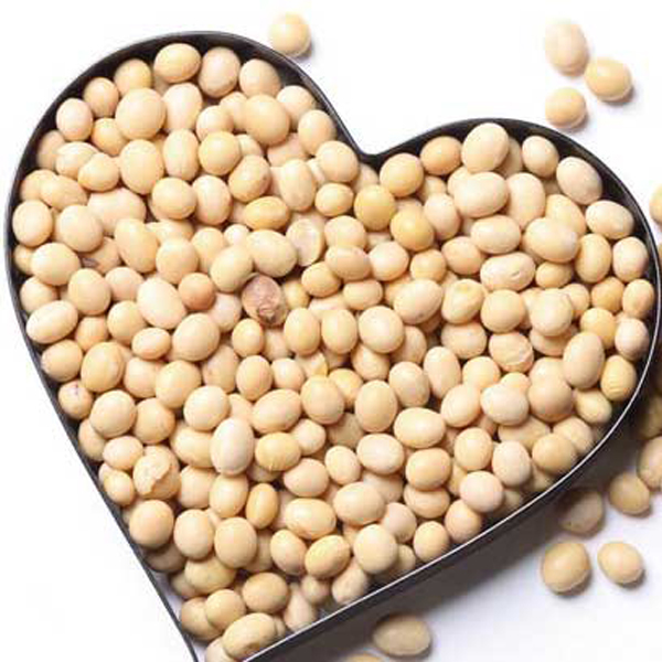 2019 Food Organic Soybean/ Soya Bean/ Soybeans brazil