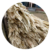 Fermented sugarcane bagasse dried, pellet, pressed block and others